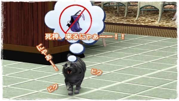 CandD-Hjikata21-4.jpg