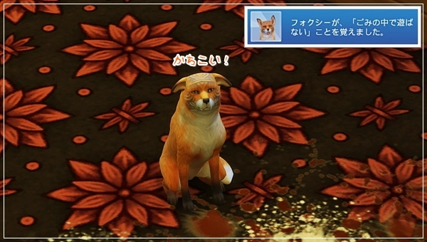 CandD-Hjikata21-49.jpg