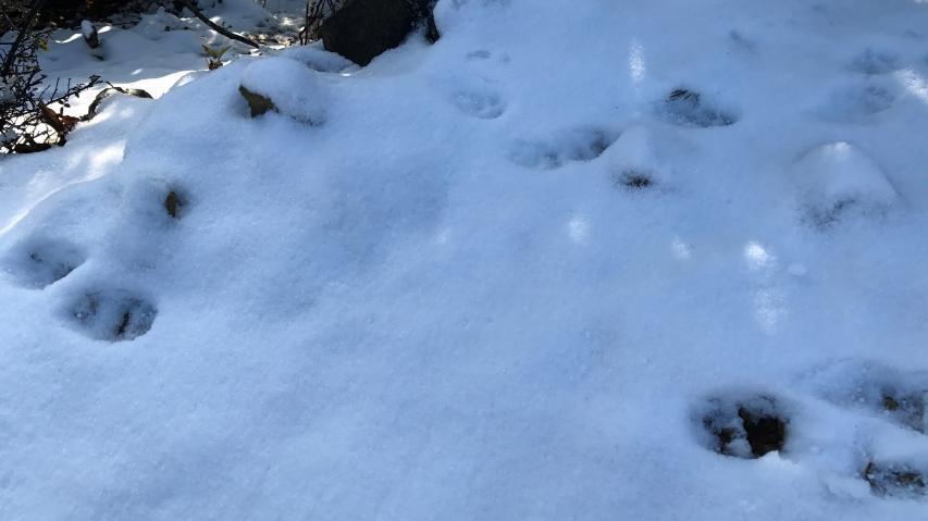 2017年12月9日に諭鶴羽山で初積雪
