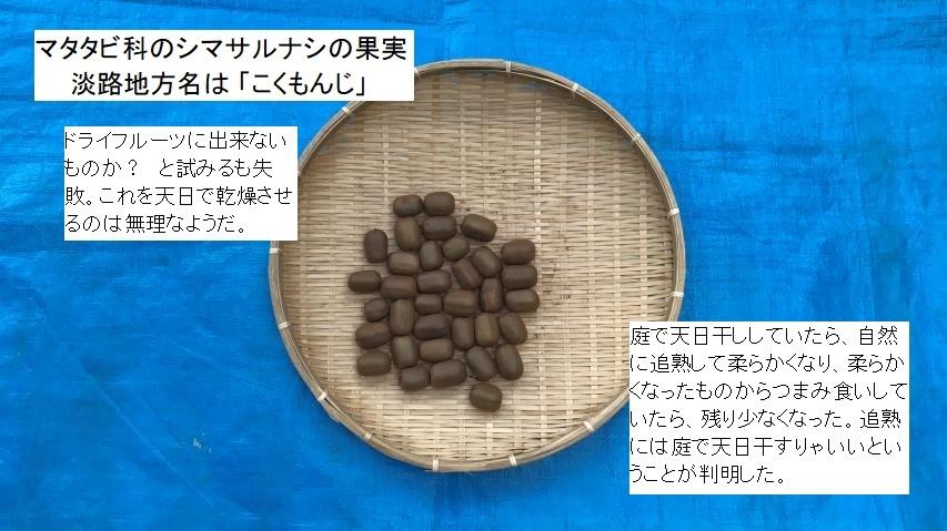 シマサルナシの乾燥は失敗