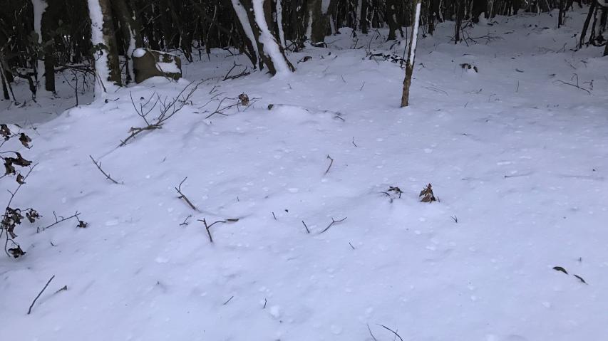 積雪は3センチか4センチのレベル