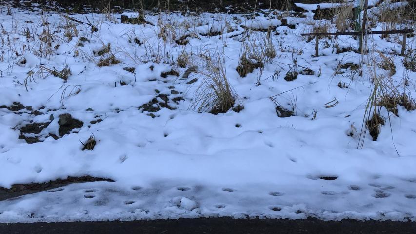 けっこう積雪があったのでは?