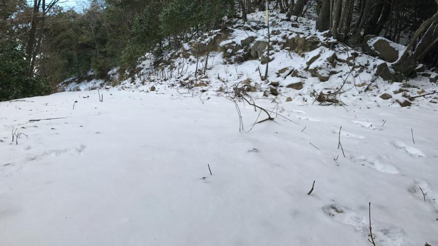 積雪は少ない