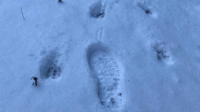 小さな動物と大きな動物の足跡