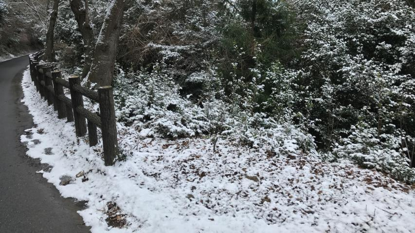 積雪はわずか