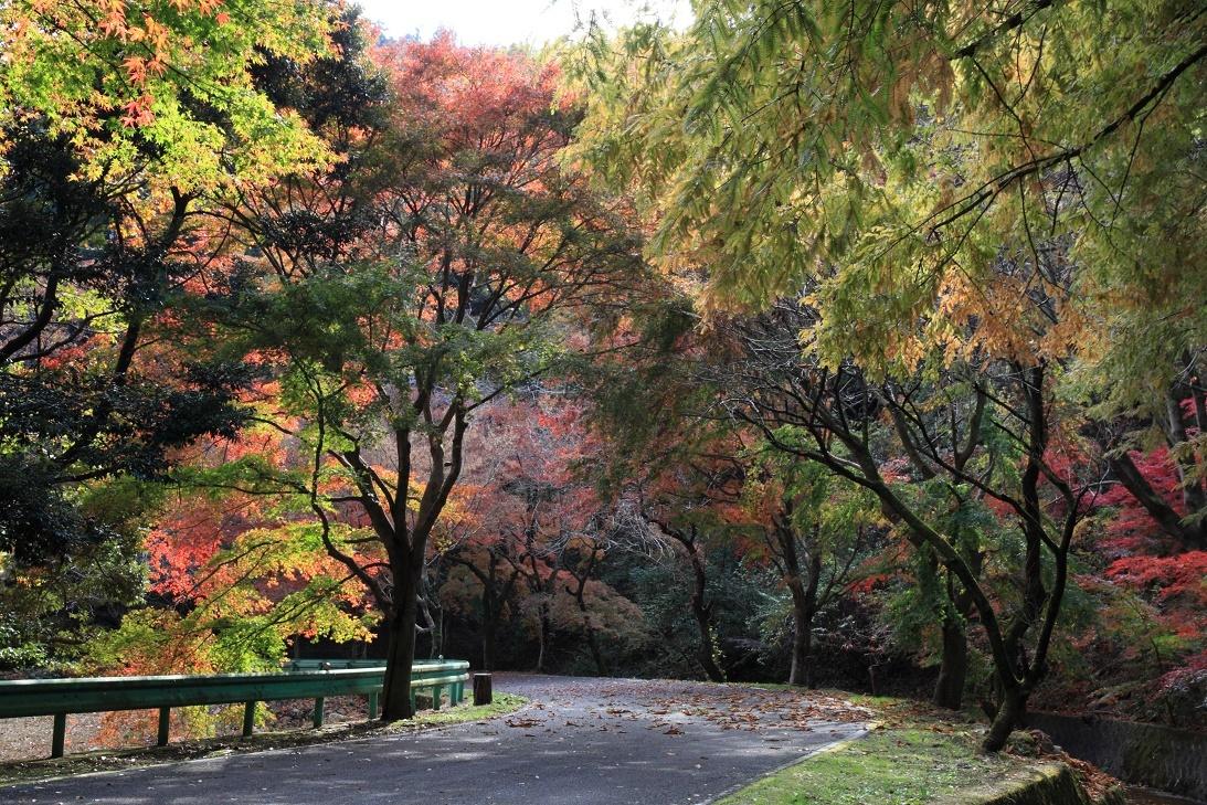 晩秋の宇都宮市森林公園17⑥