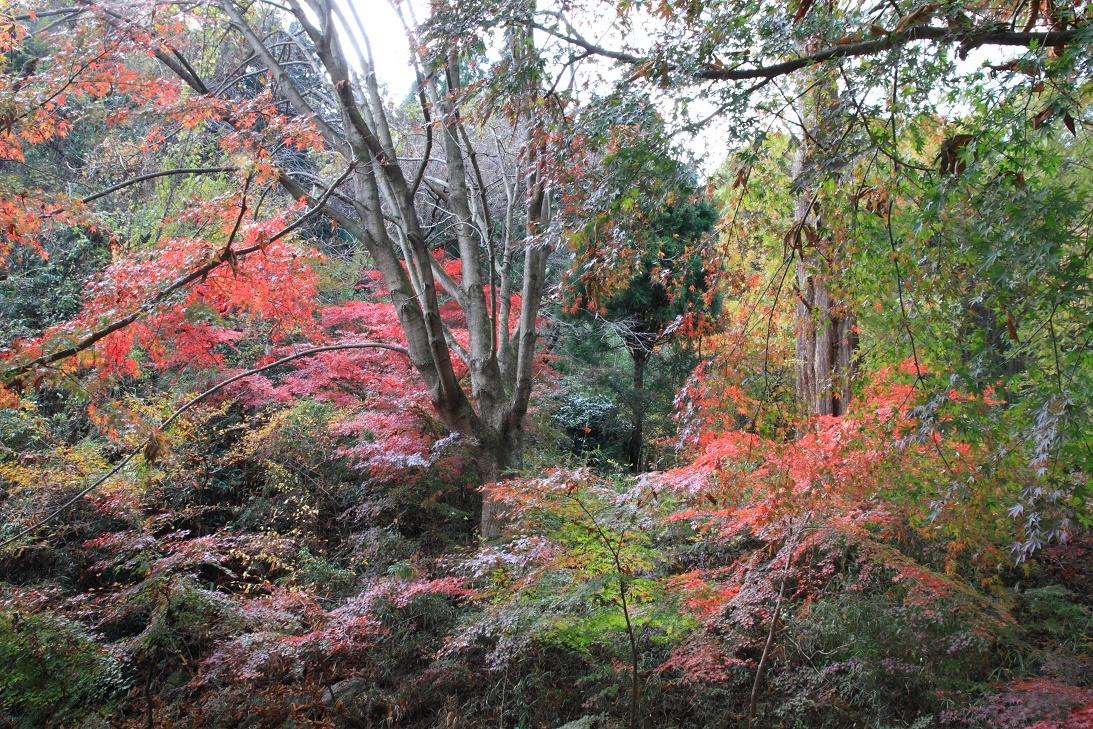 晩秋の宇都宮市森林公園17⑦