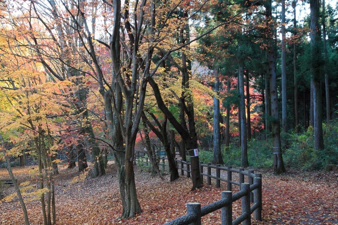 晩秋の宇都宮市森林公園17⑧