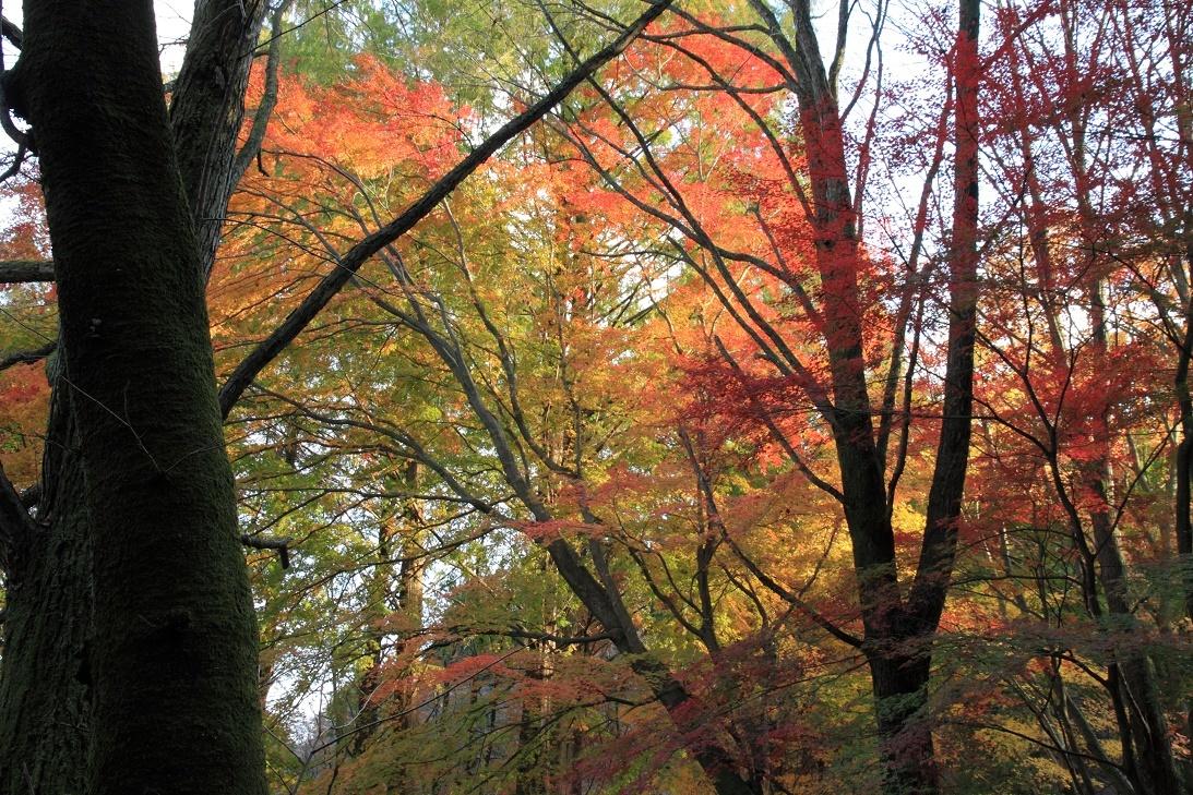 晩秋の宇都宮市森林公園17⑨