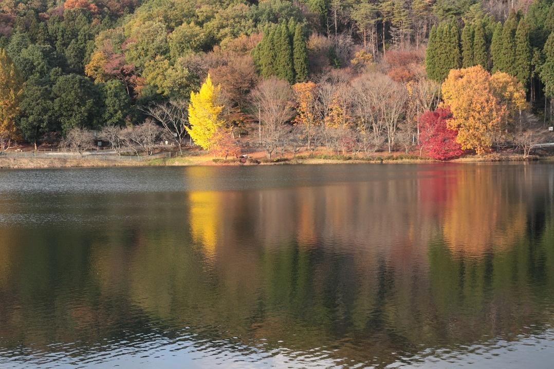 晩秋の湖畔17①