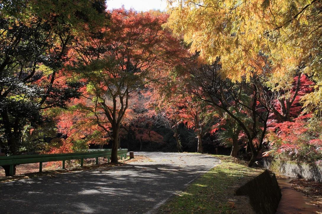 晩秋の宇都宮市森林公園17⑩