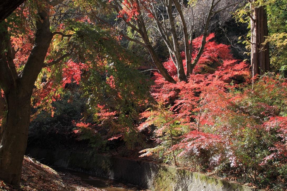 晩秋の宇都宮市森林公園17⑪