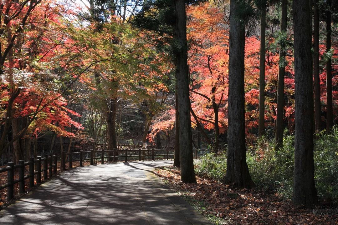 晩秋の宇都宮市森林公園17⑬