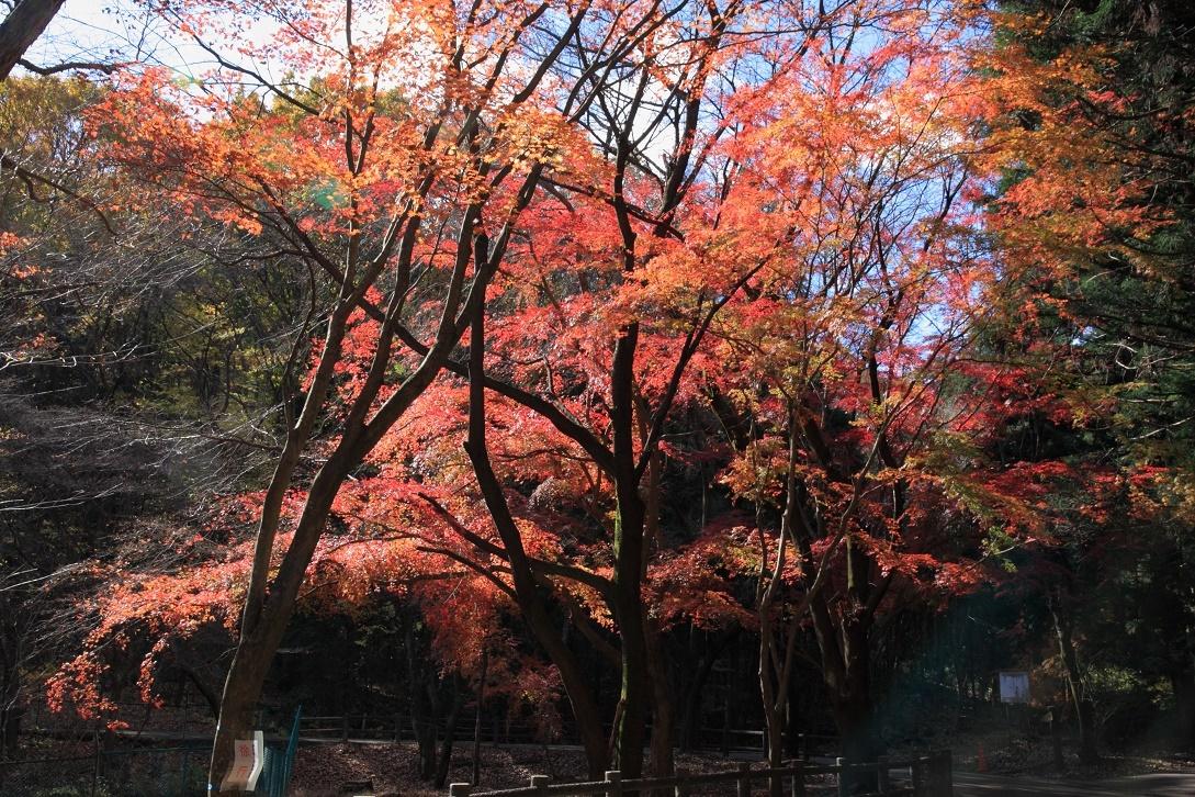 晩秋の宇都宮市森林公園17⑲
