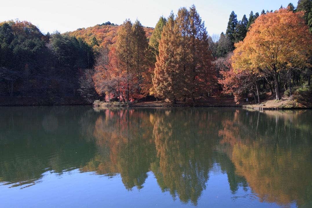 晩秋の宇都宮市森林公園17㉗