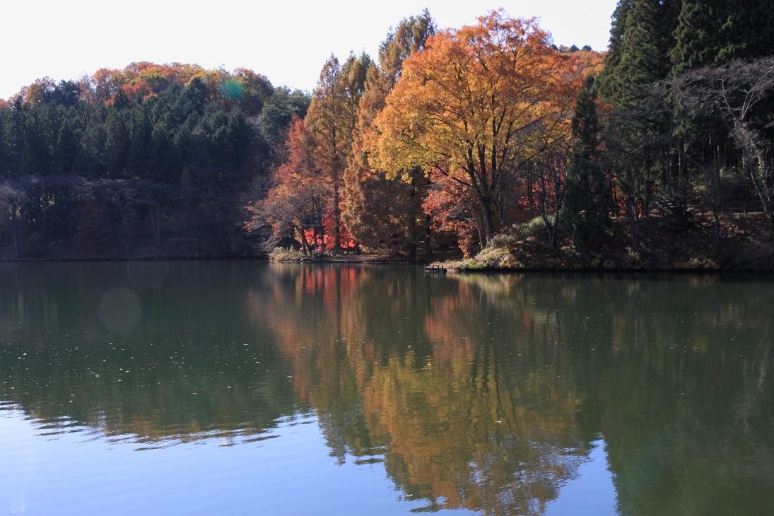 晩秋の宇都宮市森林公園17㉘