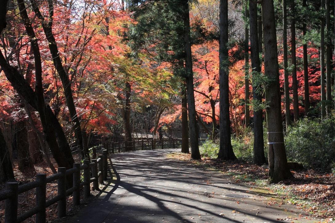 晩秋の宇都宮市森林公園17㉚