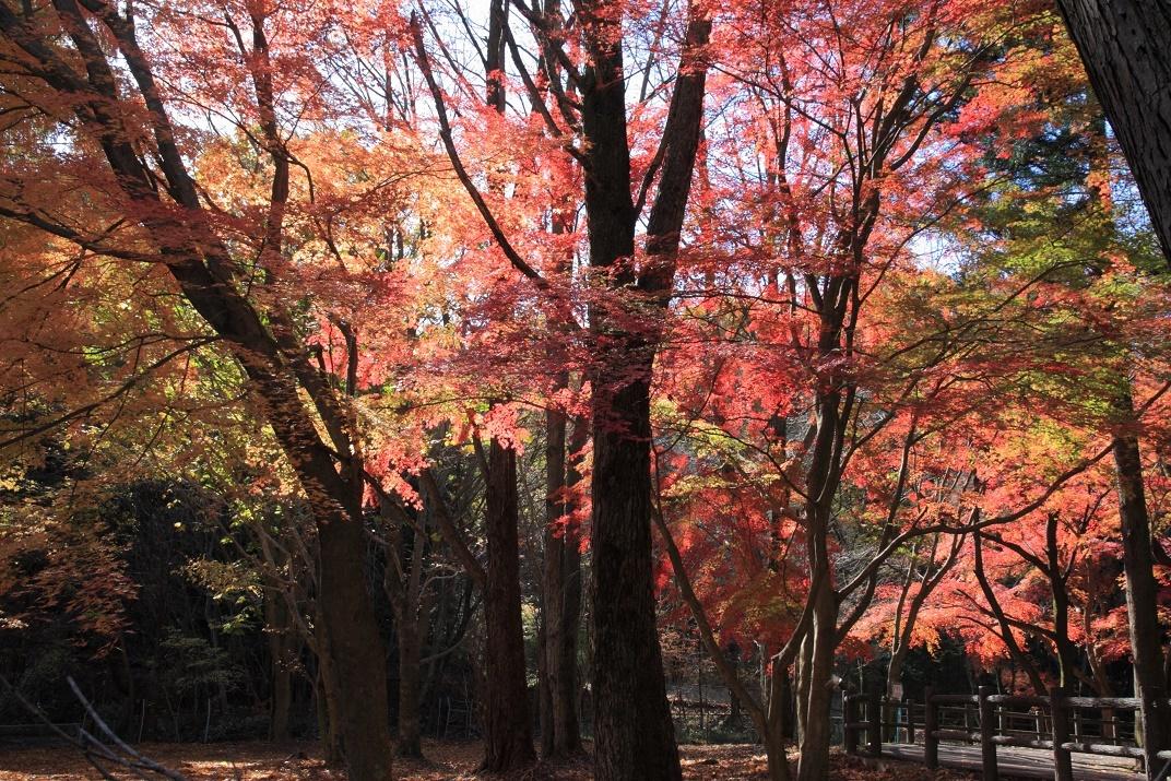 晩秋の宇都宮市森林公園17㉛