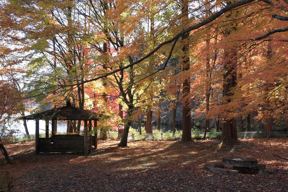 晩秋の宇都宮市森林公園17㉜