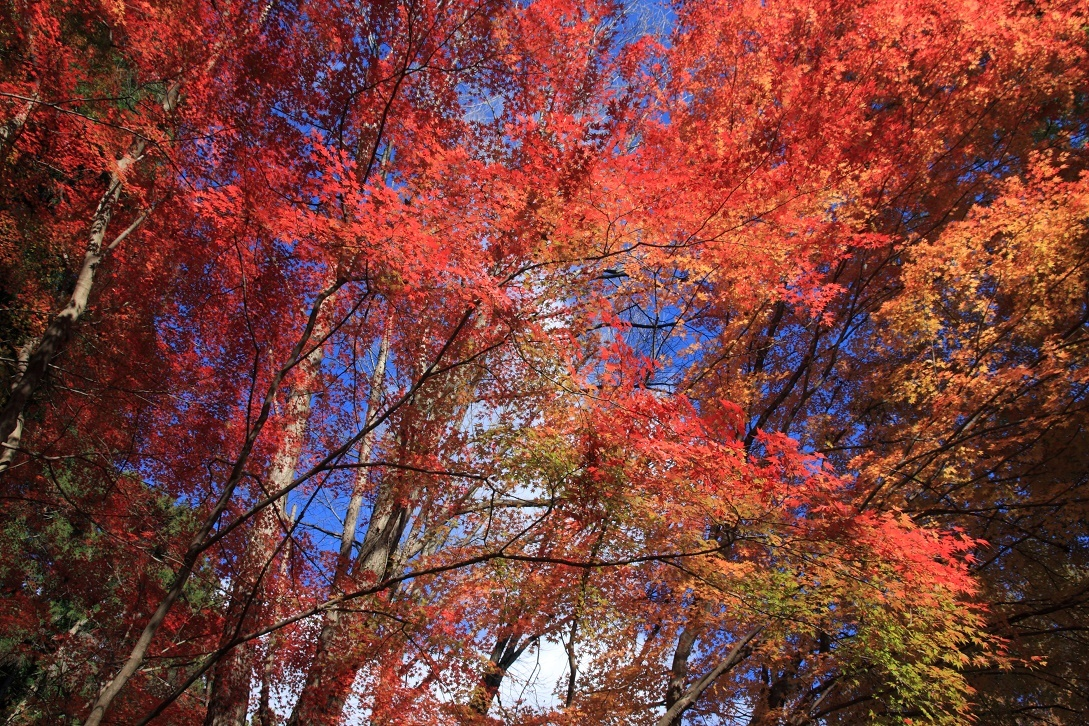 晩秋の宇都宮市森林公園17㉝