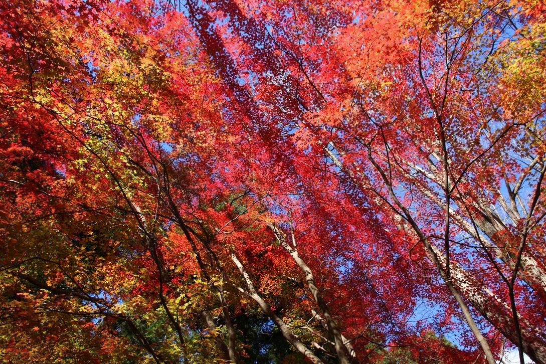 晩秋の宇都宮市森林公園17㉞