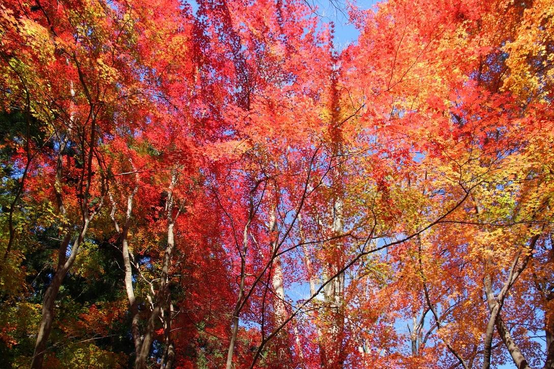 晩秋の宇都宮市森林公園17㉟