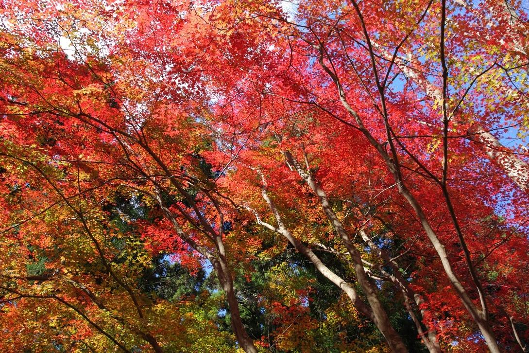 晩秋の宇都宮市森林公園17㊱