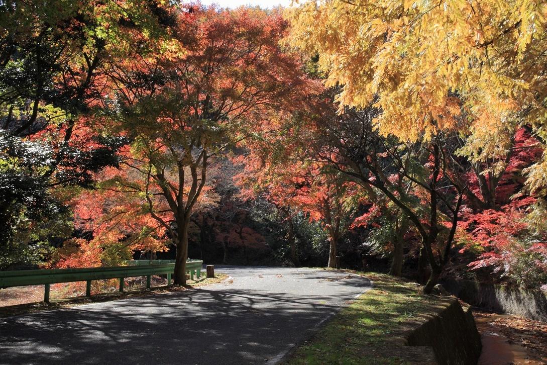 晩秋の宇都宮市森林公園17㊲