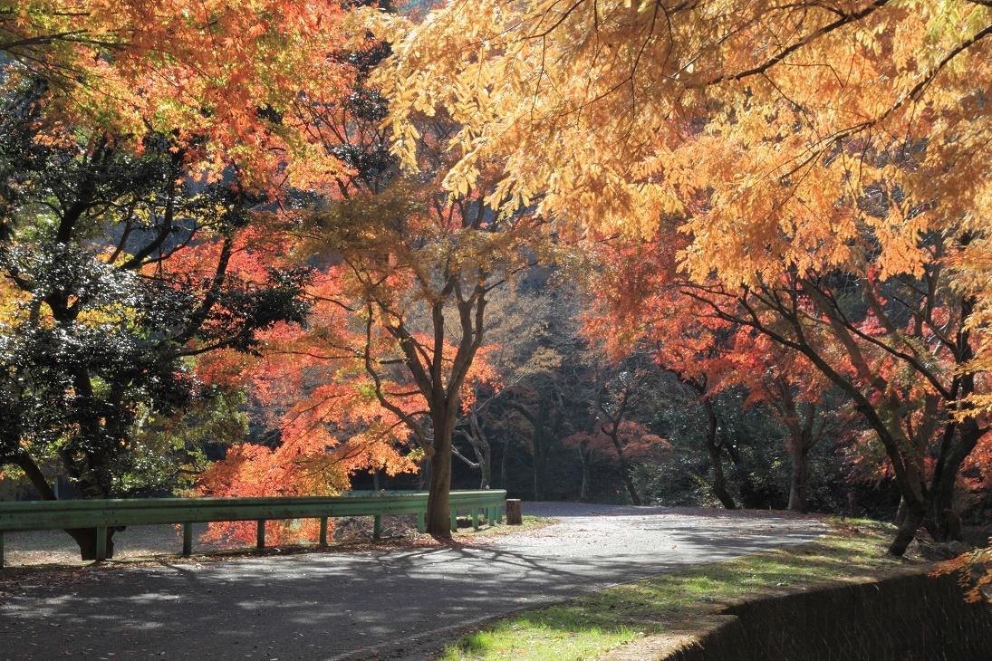 晩秋の宇都宮市森林公園17㊳