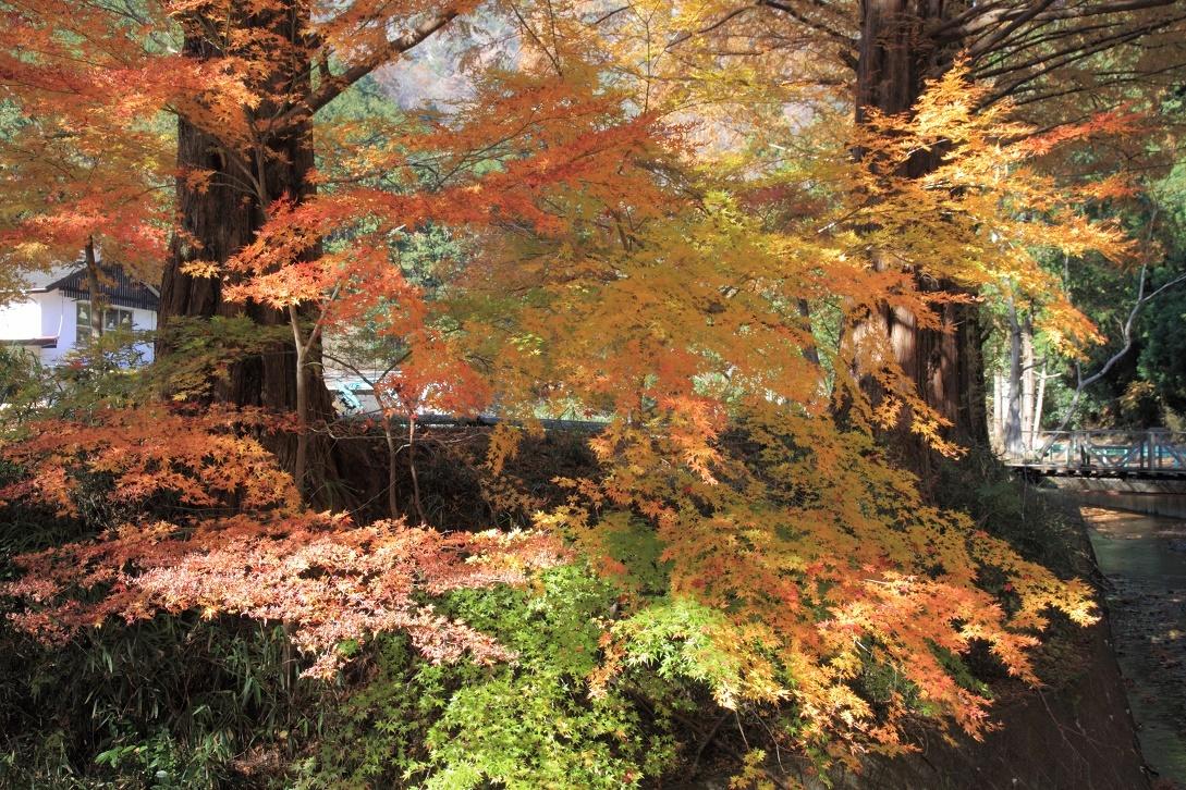 晩秋の宇都宮市森林公園17㊵