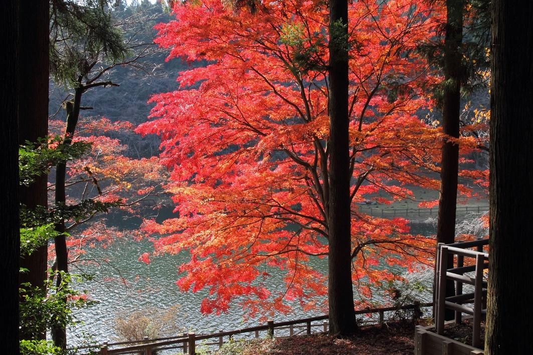 晩秋の宇都宮市森林公園17㊸
