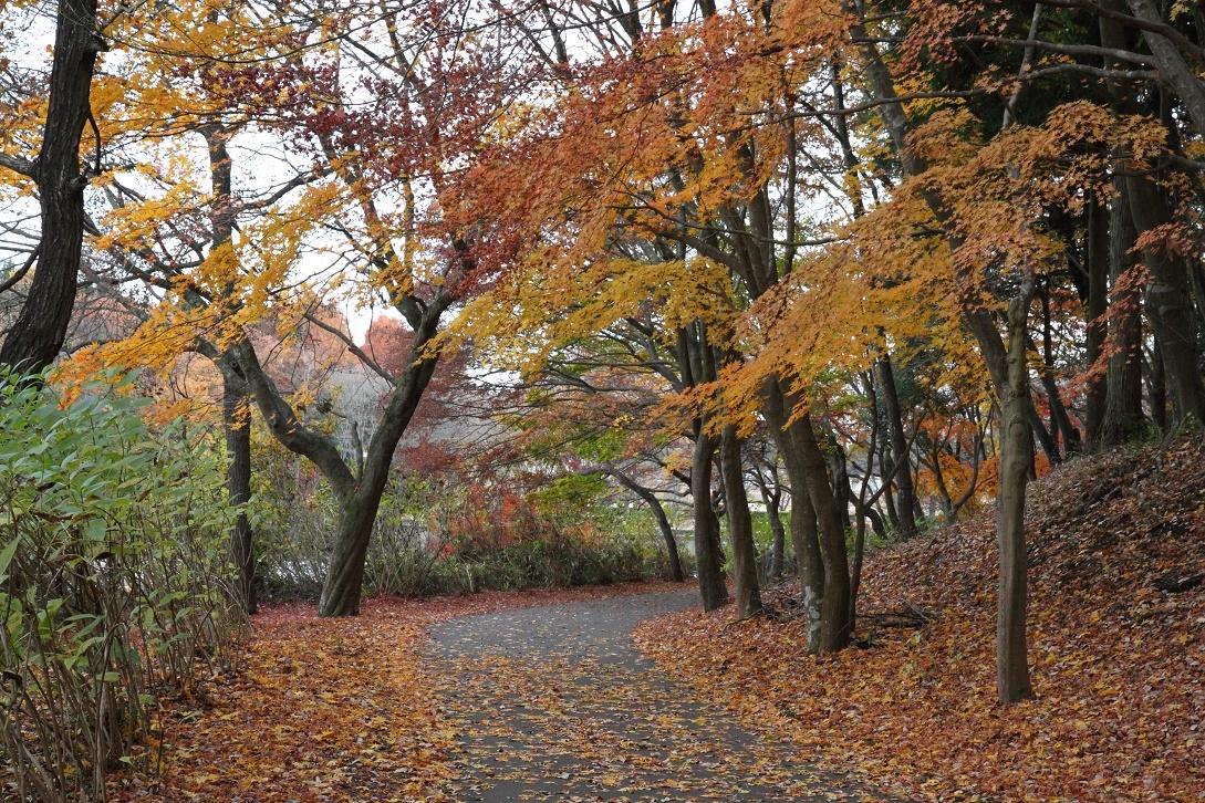 井頭公園・秋の散歩道17③
