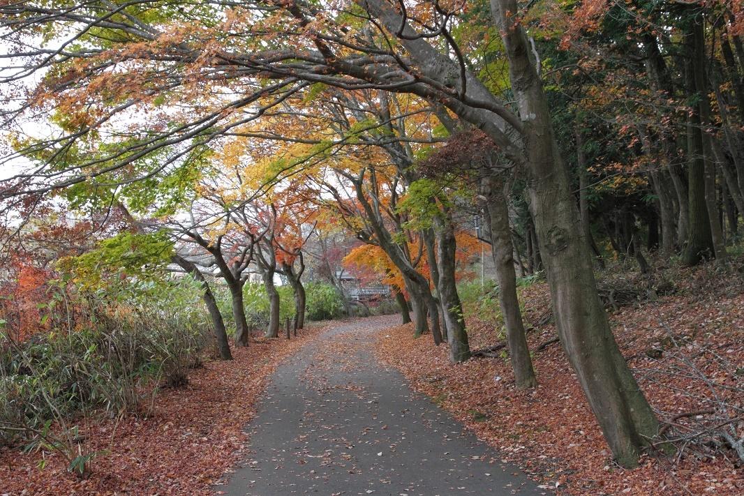 井頭公園・秋の散歩道17④