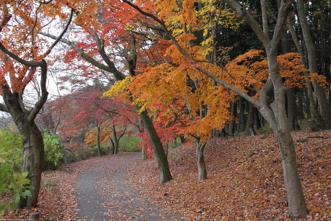 井頭公園・秋の散歩道17⑤