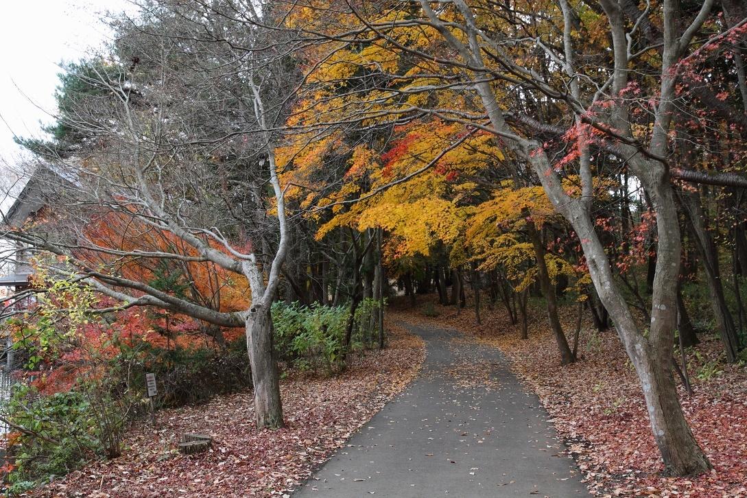 井頭公園・秋の散歩道17⑧