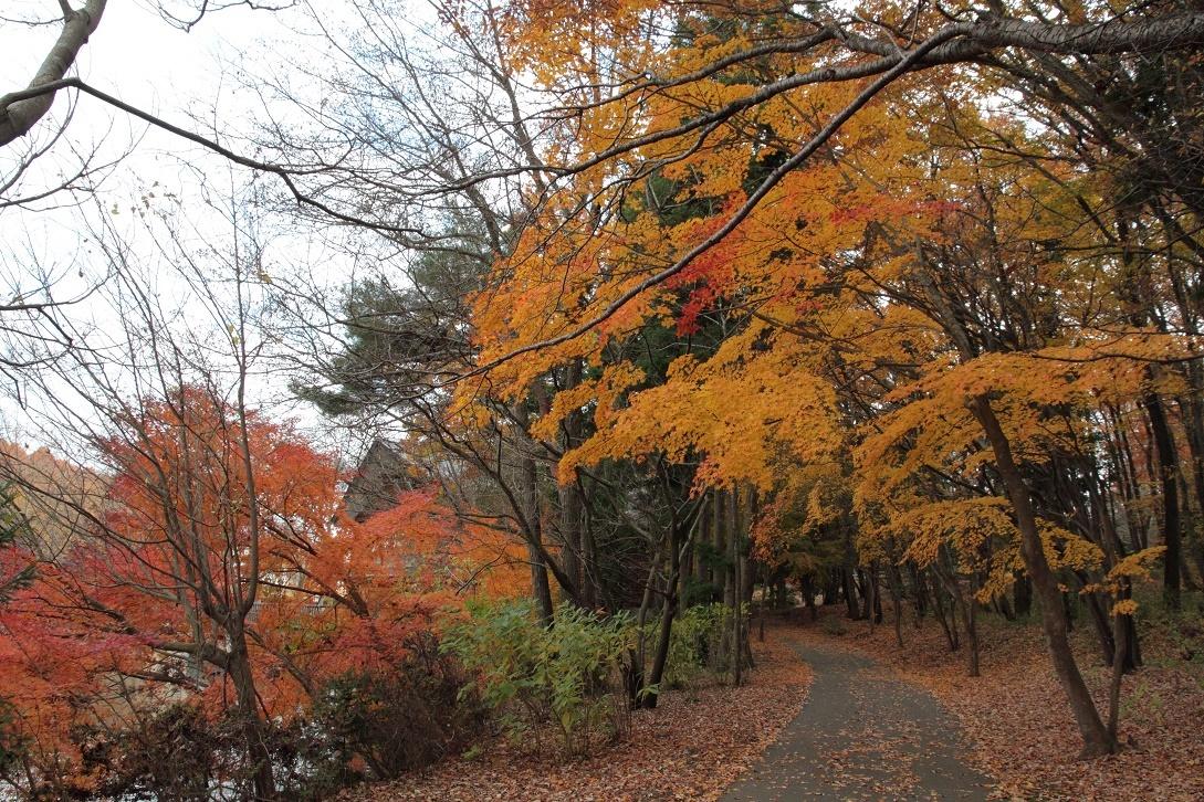 井頭公園・秋の散歩道17⑨