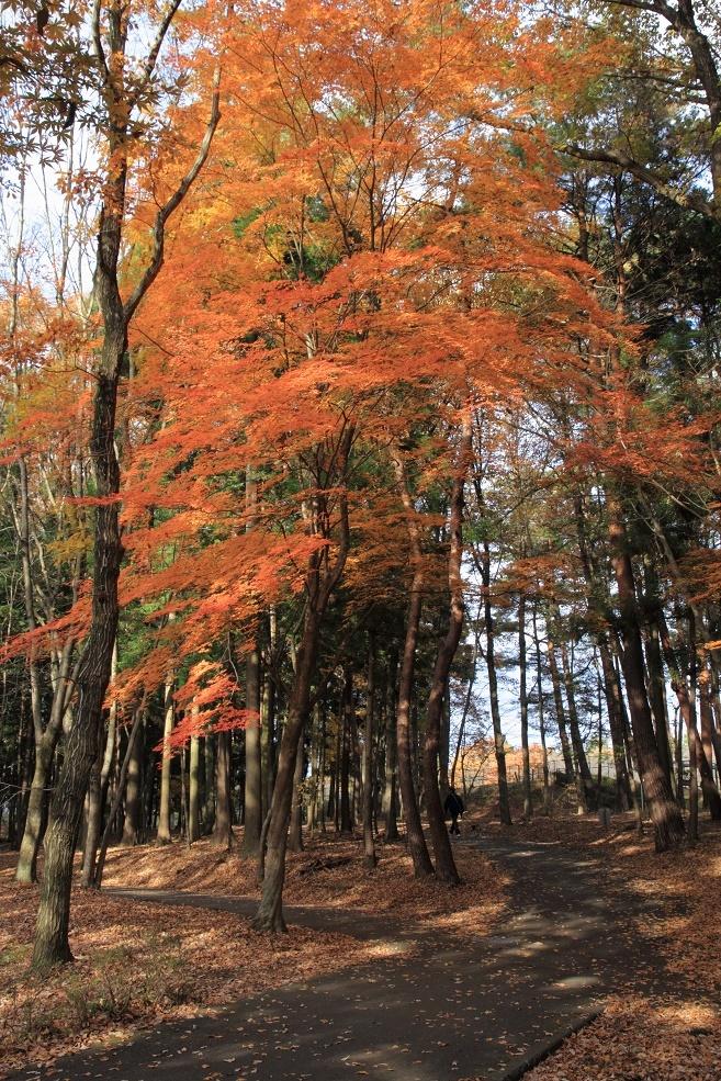 井頭公園・秋の散歩道17⑩