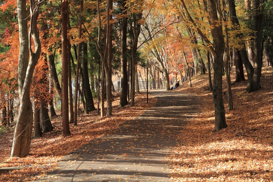 井頭公園・秋の散歩道17⑪