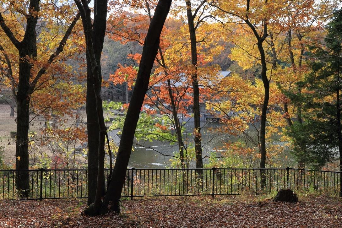 晩秋の井頭公園17⑨