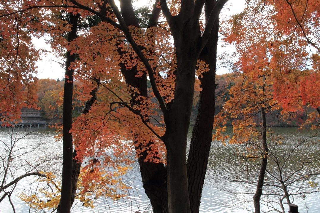 晩秋の井頭公園17⑩
