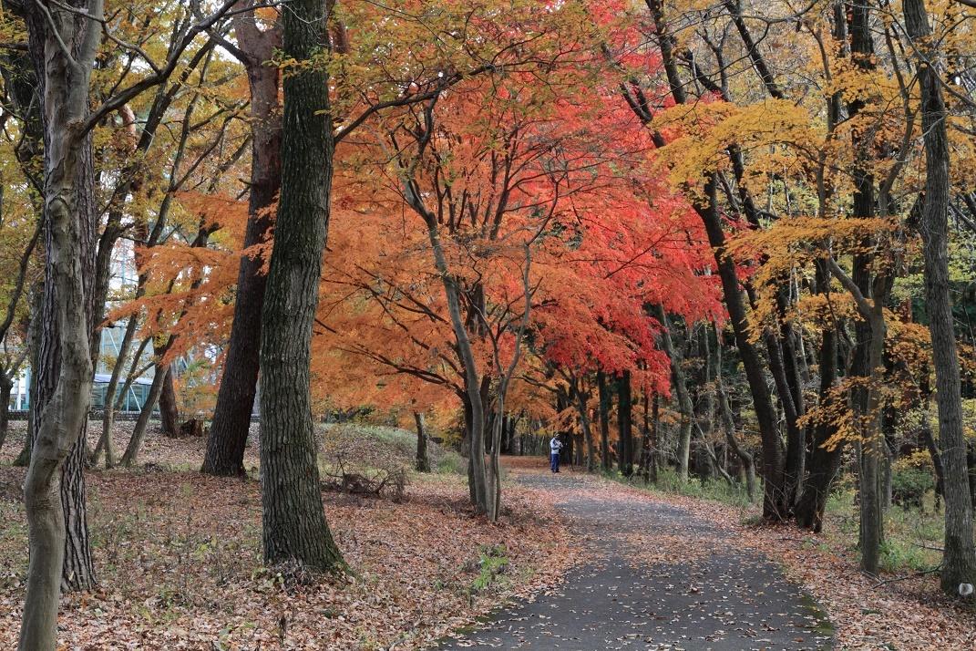 井頭公園・秋の散歩道17⑫