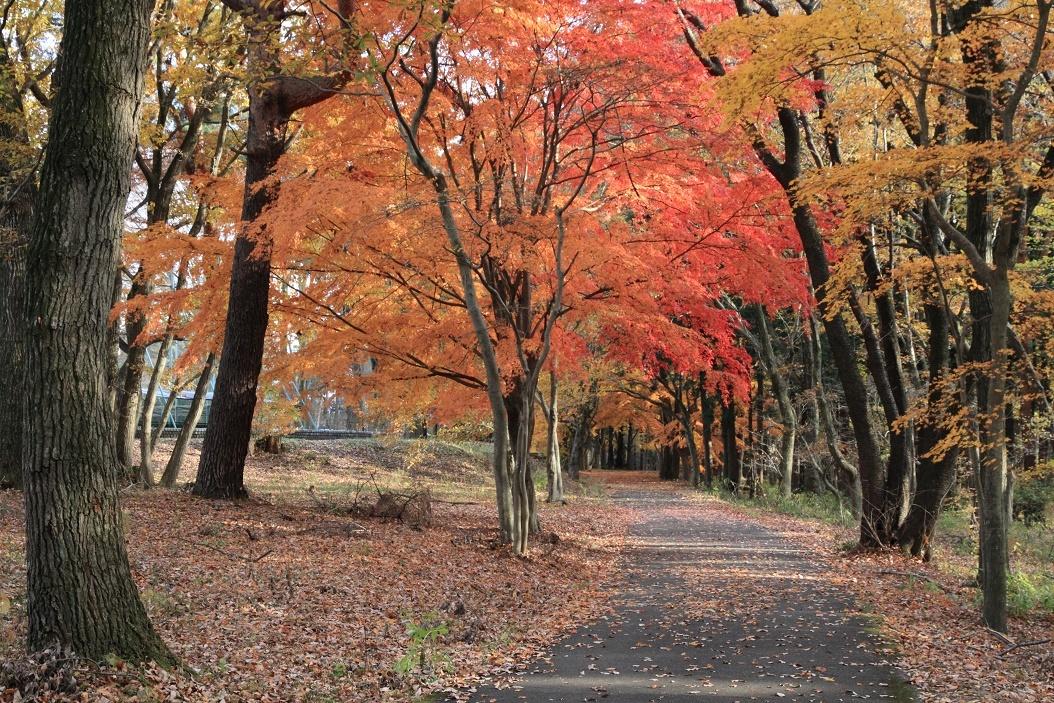 井頭公園・秋の散歩道17⑬