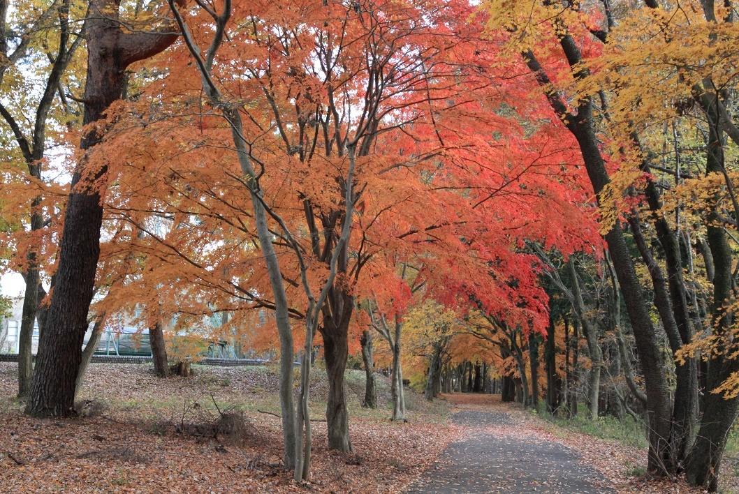 井頭公園・秋の散歩道17⑭