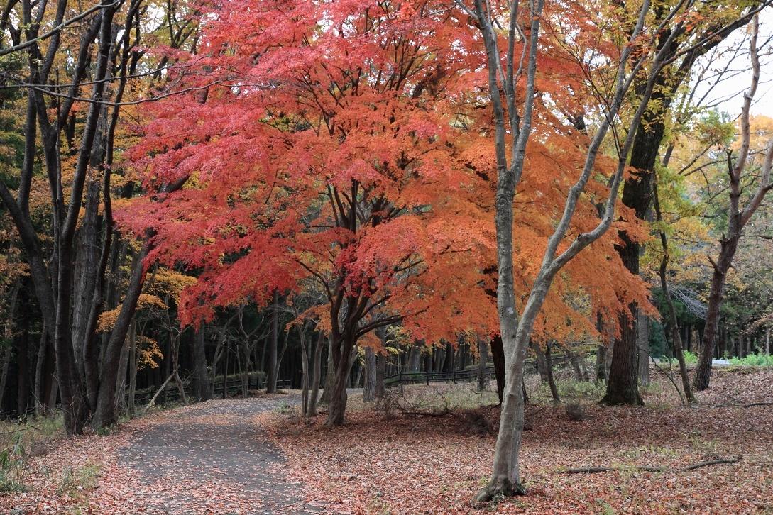 井頭公園・秋の散歩道17⑮