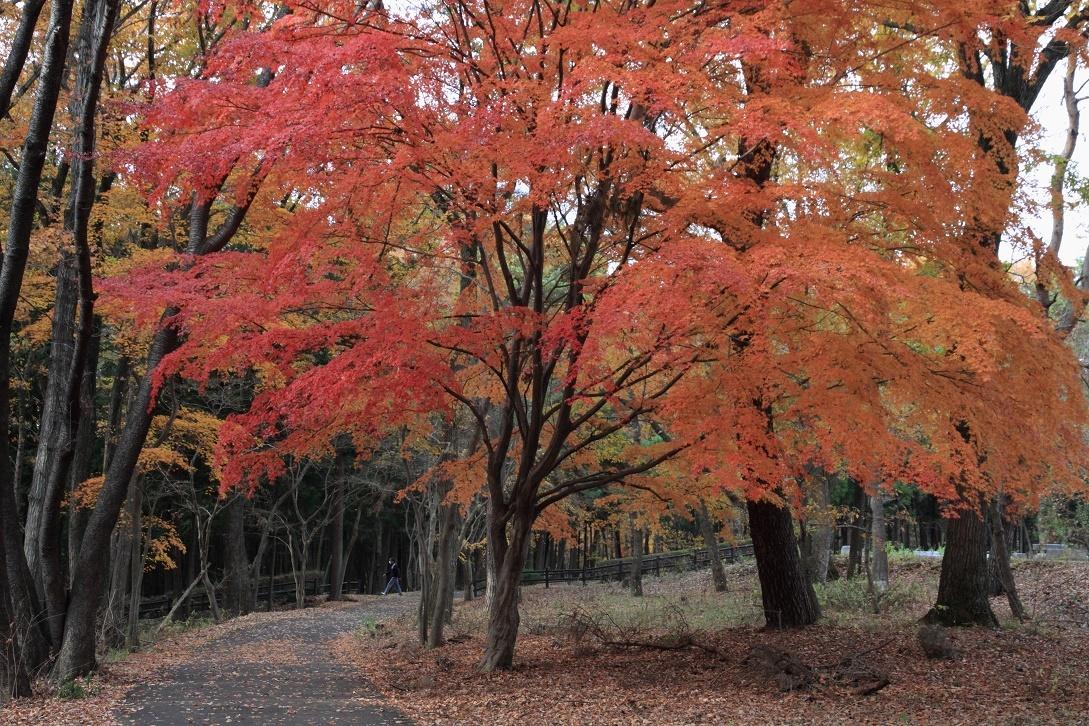 井頭公園・秋の散歩道17⑯