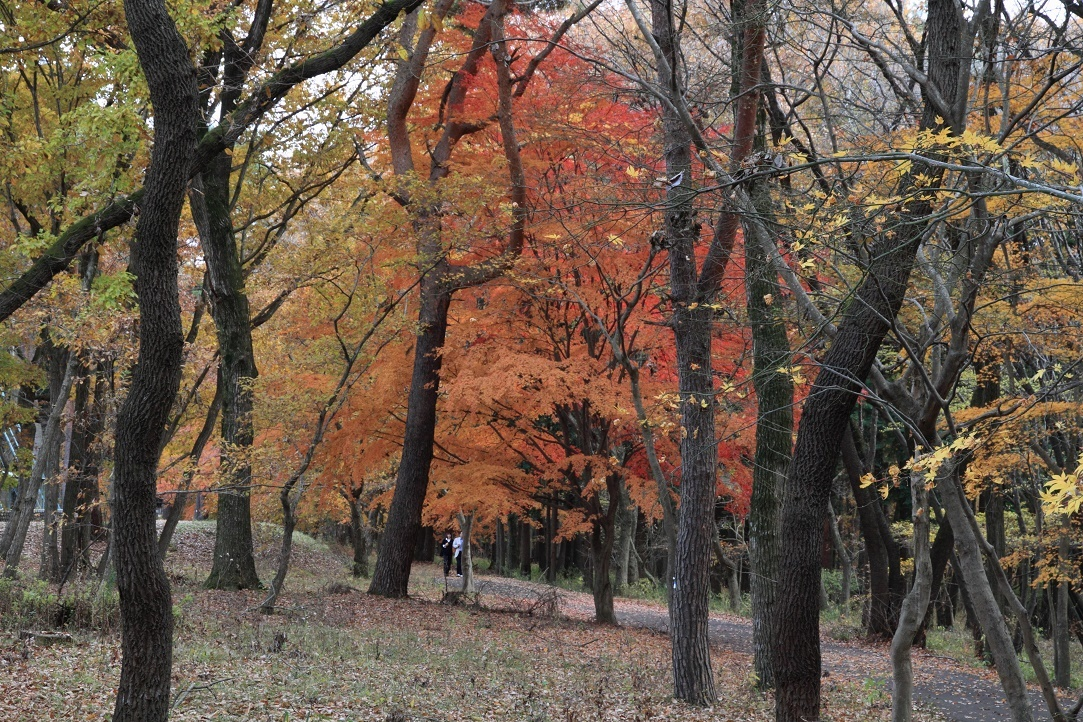 井頭公園・秋の散歩道17⑰
