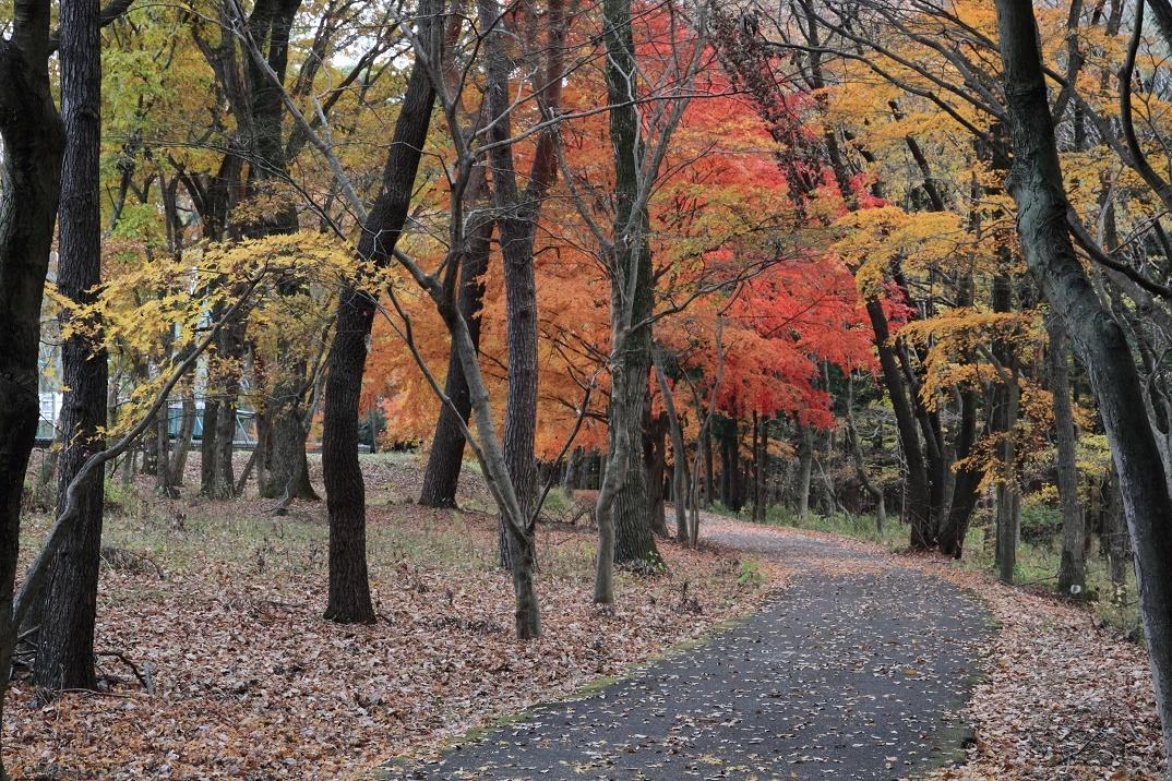 井頭公園・秋の散歩道17⑱