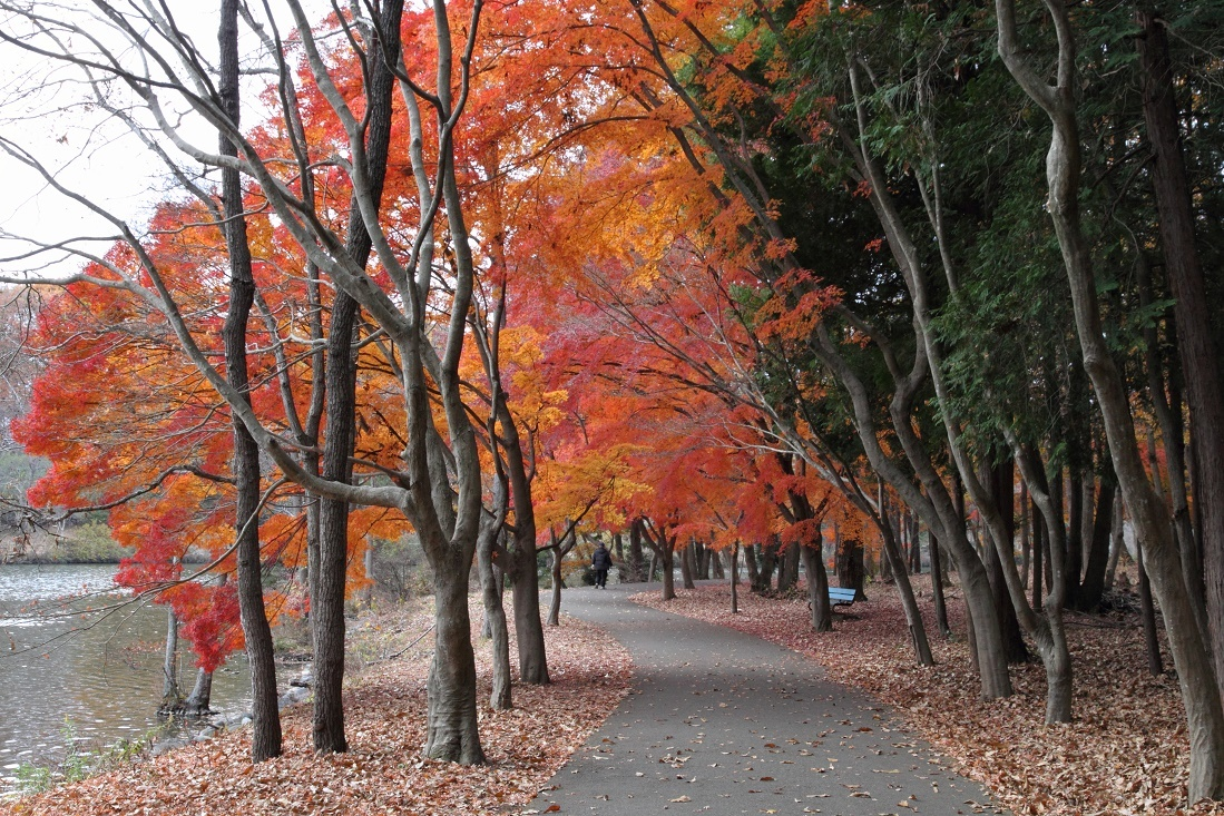 井頭公園・秋の散歩道17⑲