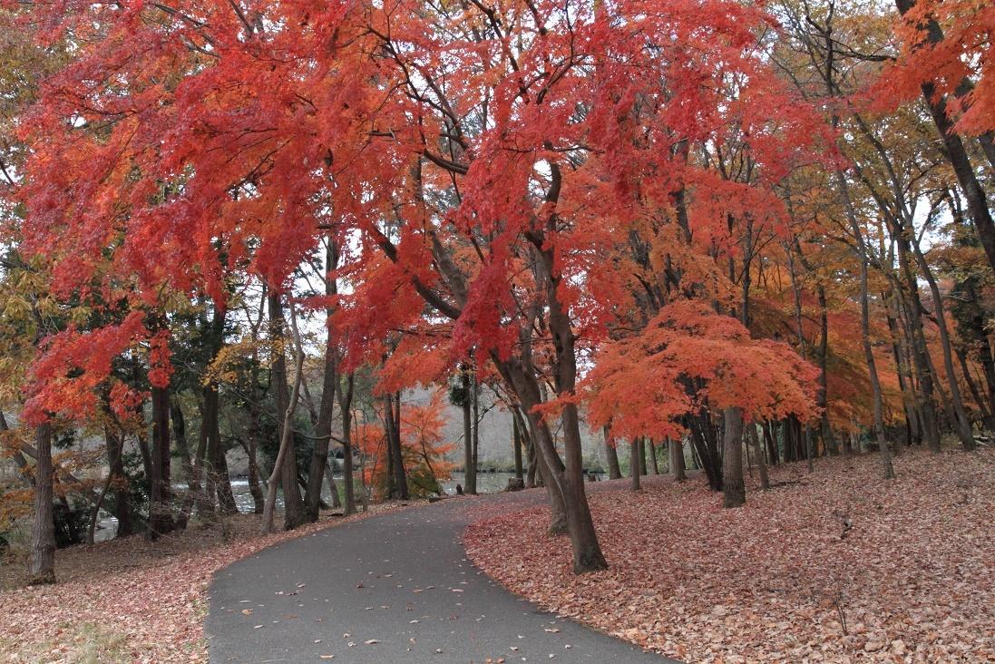 井頭公園・秋の散歩道17⑳