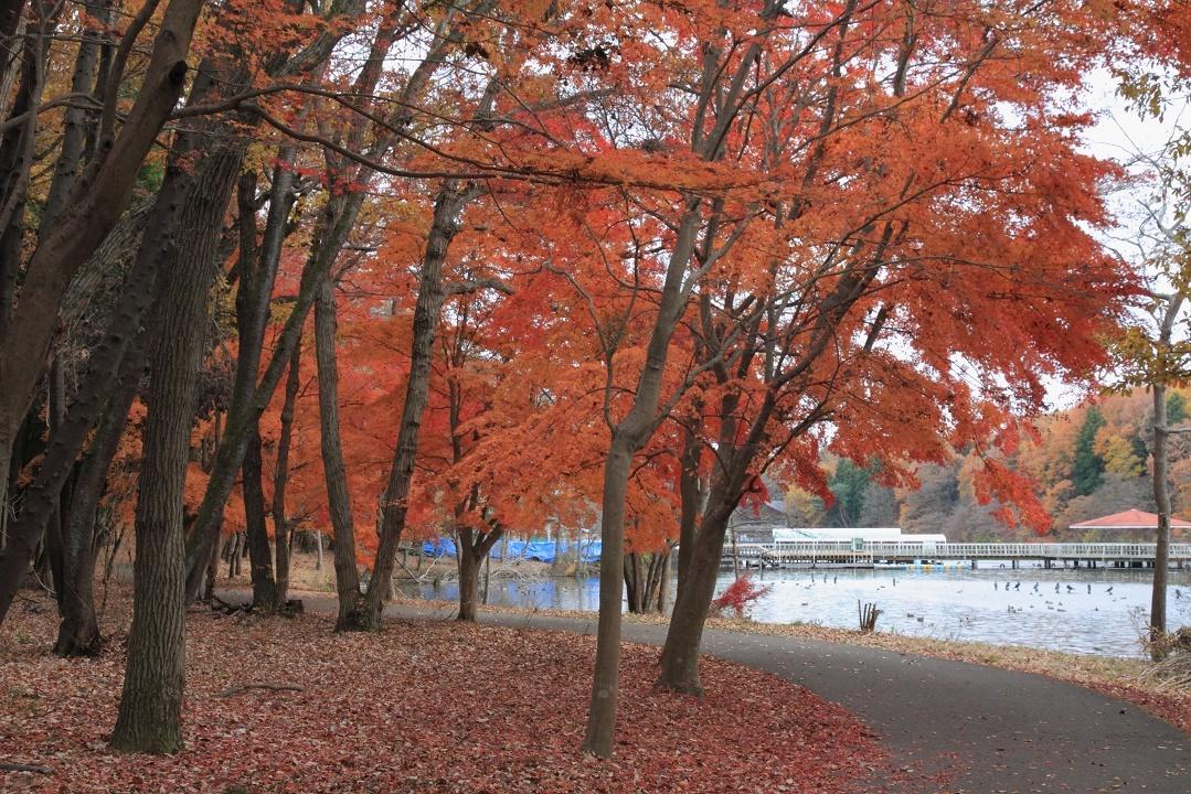 井頭公園・秋の散歩道17㉑